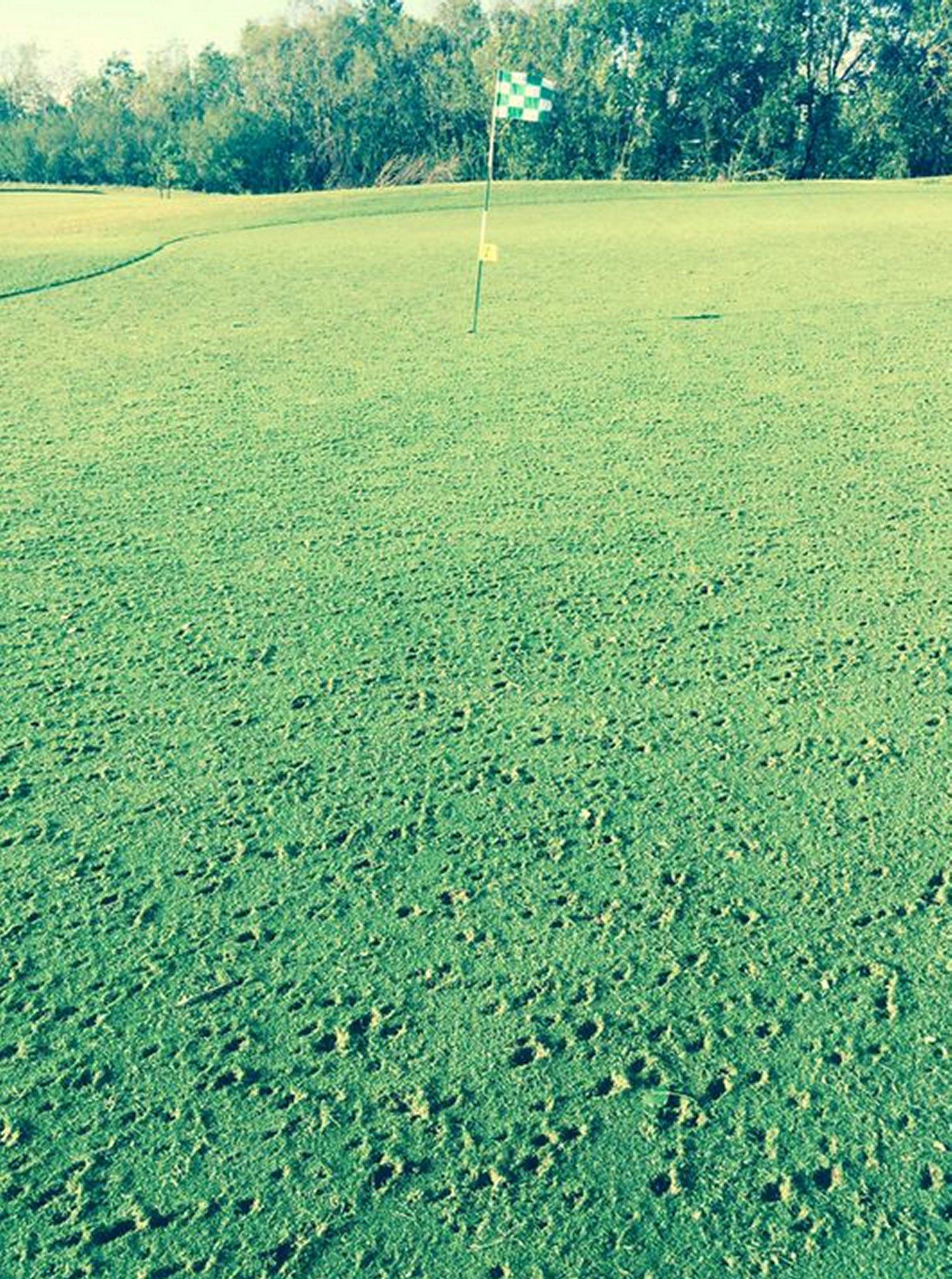 Golf green in Kerrobert, SK badly damaged by the hail. (Source: Twitter - @EarlsSalesMarc)
