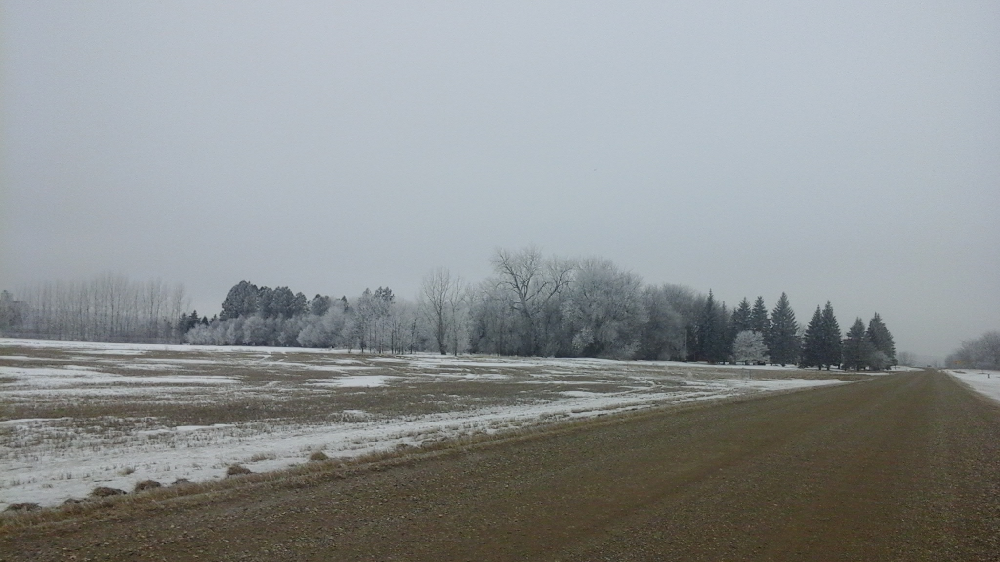 Hoar frost and lack of snow south of Winkler February 1, 2016